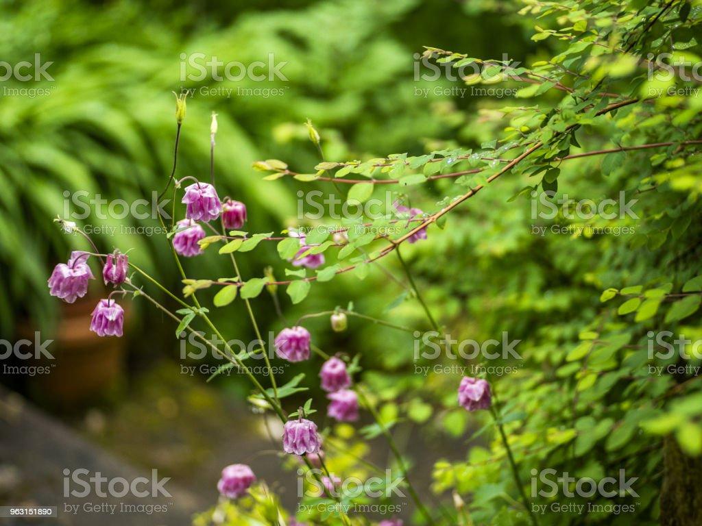lush green garden after rain stock photo