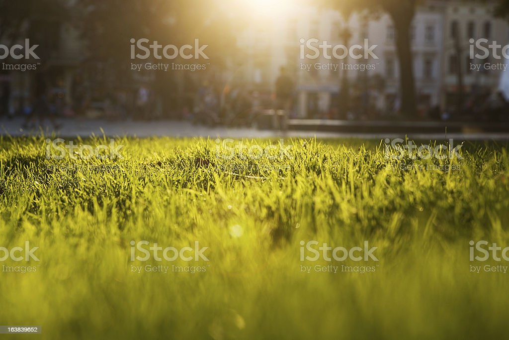 Lush green grass against blinding sun with obscured building stock photo