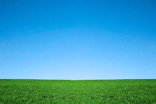 istock Lush green grass and cool blue sky background 157481993