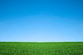 青々とした緑の芝生とクールなブルーの空。自然の背景フィールド