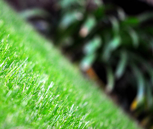 Lush Green Grass And Plants At An Angle