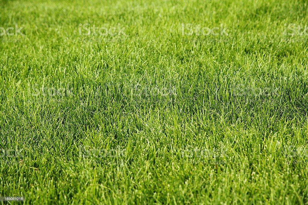 Lush green grass freshly cut stock photo