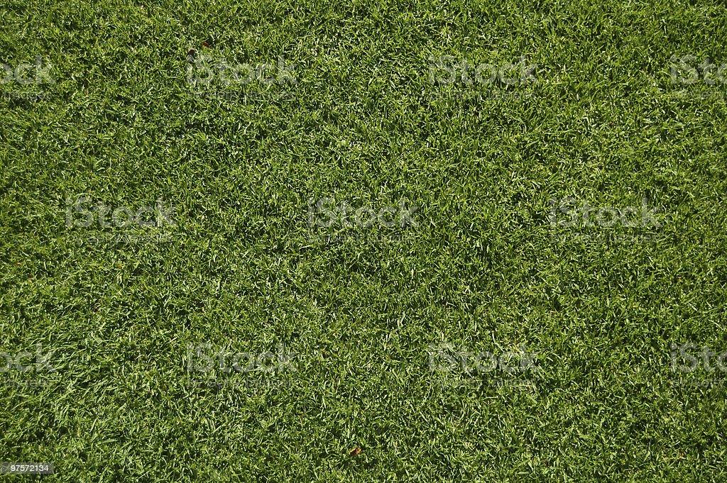 Lush Green Grass royalty-free stock photo