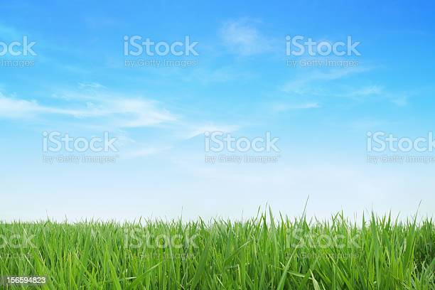 Lush green grass with blue sky background picture id156594823?b=1&k=6&m=156594823&s=612x612&h=ayuvhpj7jdlx3pcgk9zfh o9xps1 dlufmruc3ja6ey=