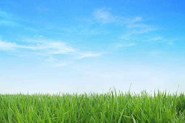 Lush green grass with blue sky background picture id156594823?b=1&k=6&m=156594823&s=612x612&w=0&h=pdau5sfl5axbmekow4ejcginp 0xiasgsvzk9j6vrla=