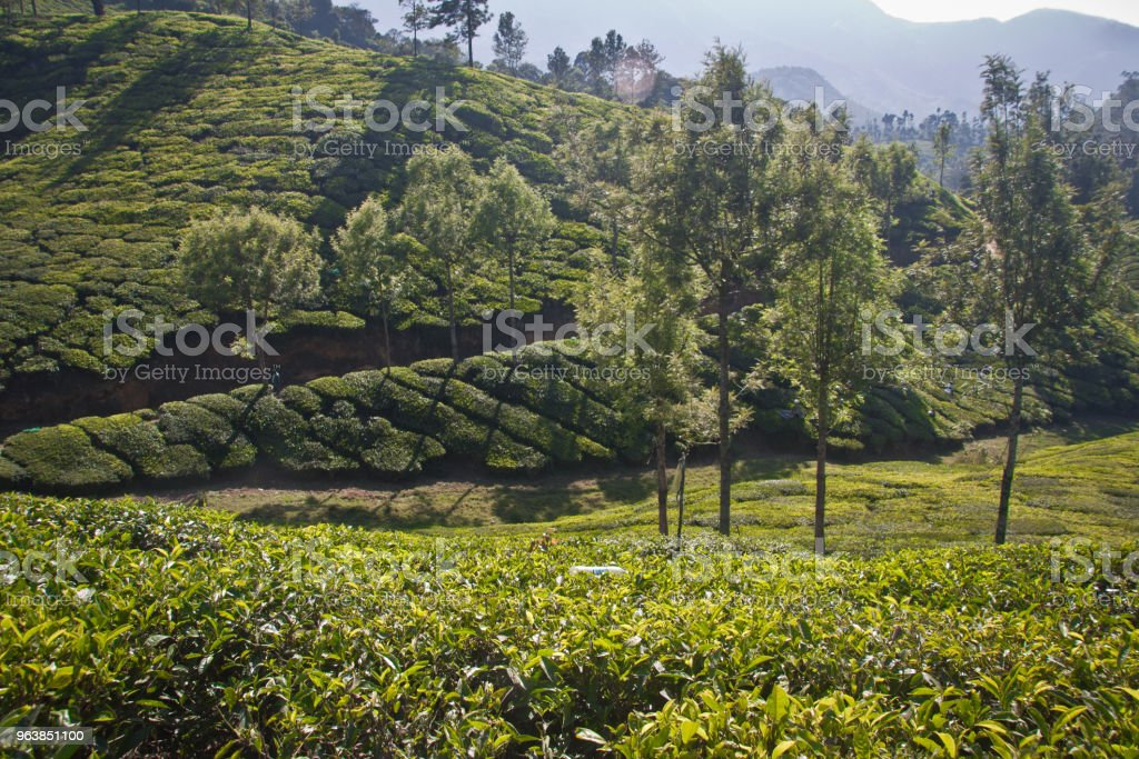 Lush green landscape of Munnar - Royalty-free Color Image Stock Photo