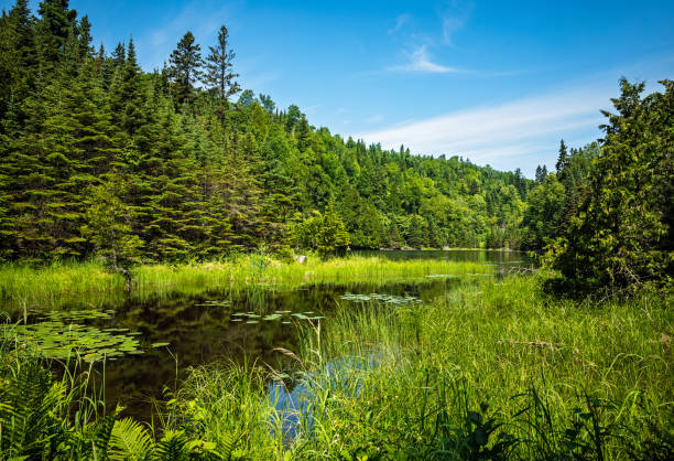 lush green landscape on the Talus lake Trail hike in Sleeping Giant Provincial Park, Ontario, Canada stock photo