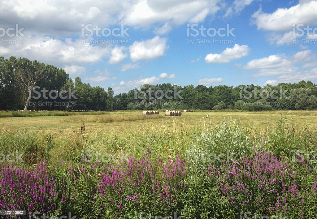 Lush green meadow with several hay bales under blue sky. royalty-free stock photo