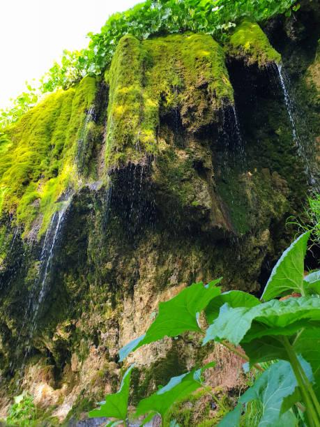 Lush green moss at Pietrele Vorbitoare waterfalls stock photo