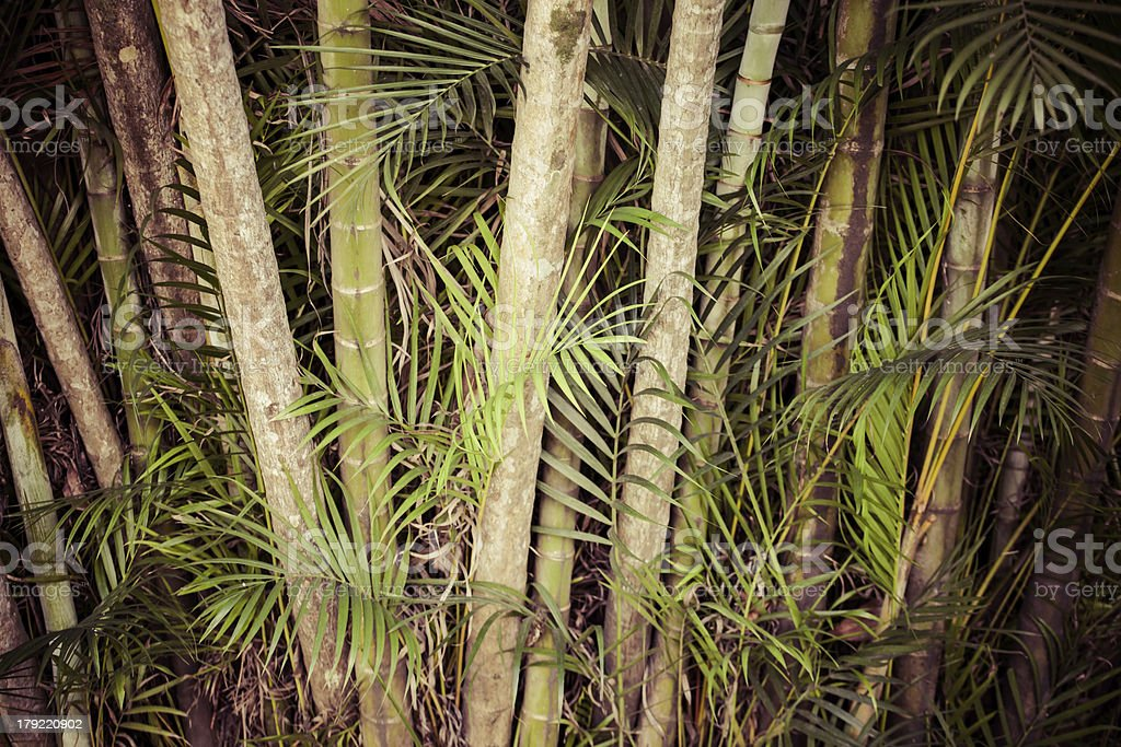 Lush green palm leaves in tropical forest royalty-free stock photo
