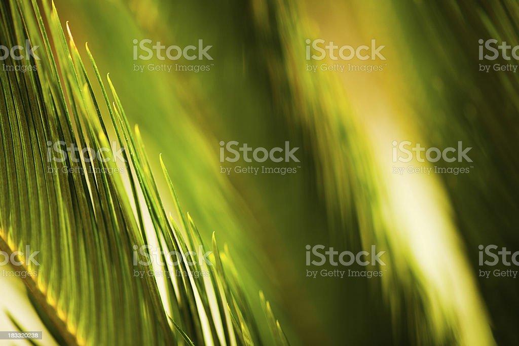 lush green plant stock photo