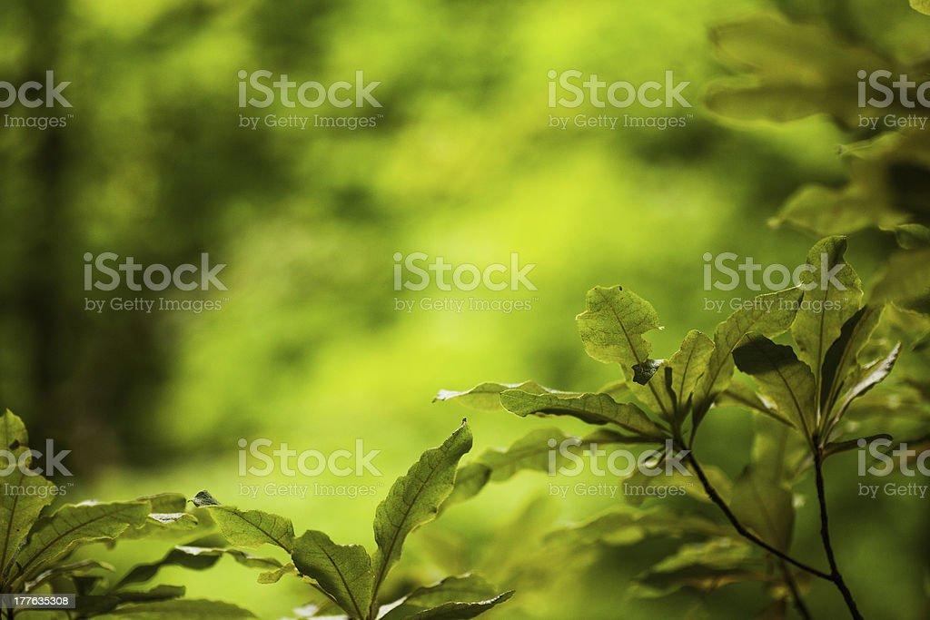 Lush green plants royalty-free stock photo