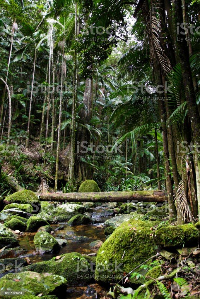 Lush Green Rainforest royalty-free stock photo