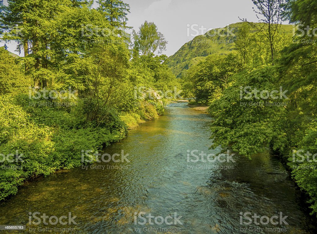 Lush Green River royalty-free stock photo