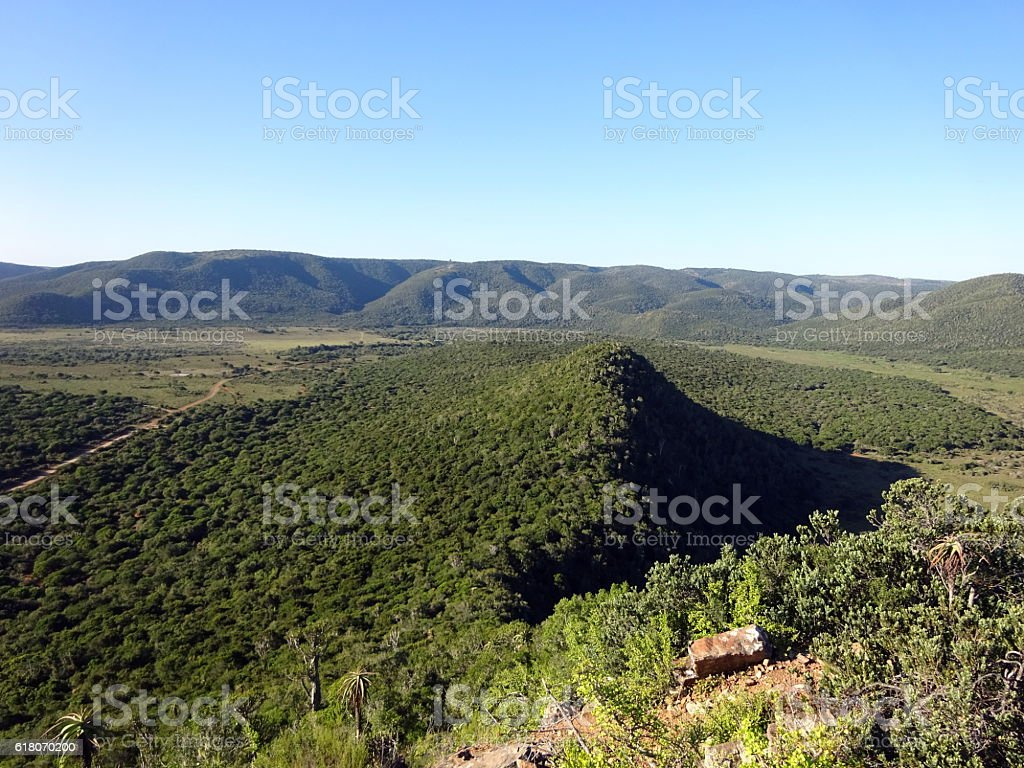 Lush green safari landscape stock photo