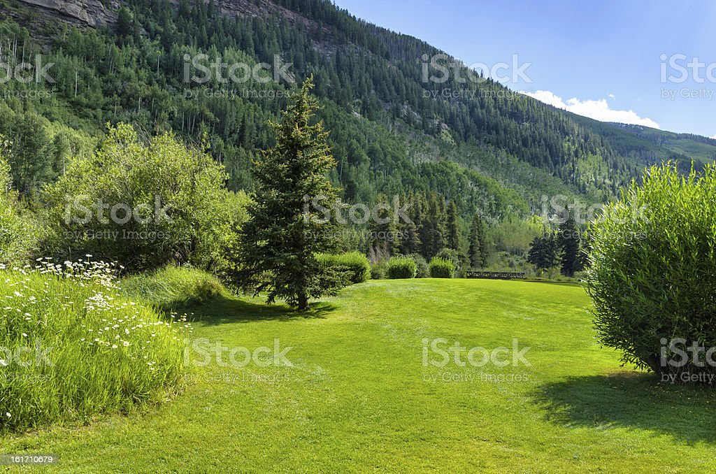 Lush Green Scenic Backdrop Area royalty-free stock photo