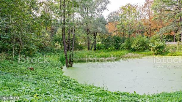 Photo of Lush green swamp . The sun is peaking through the thick foliage to reveal a gorgeous natural landscape