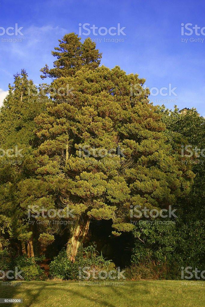 lush green tree stock photo