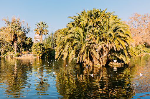 lush green trees and beautiful lake in parc de la ciutadella, barcelona, spain