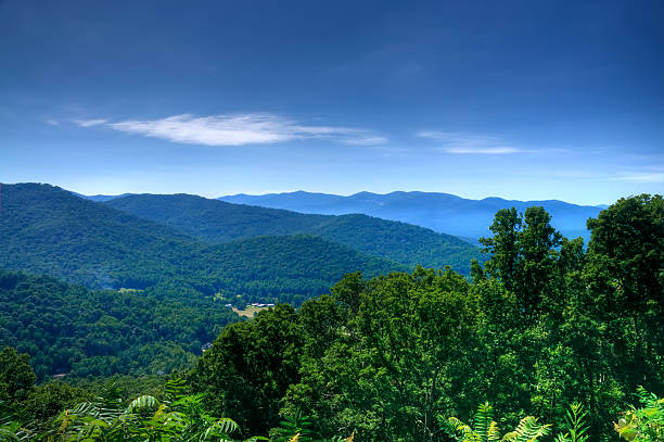 Lush green trees on the Blue Ridge Mountains Overlooking the Blue Ridge Mountains in North Carolina.  Processed in HDR. blue ridge mountains stock pictures, royalty-free photos & images