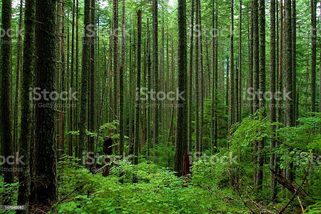 Lush green trees royalty-free stock photo