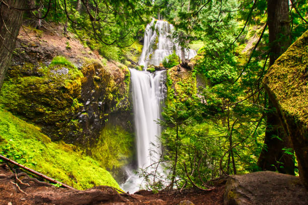 Lush green valley with Fall creek falls in Southern Washington stock photo