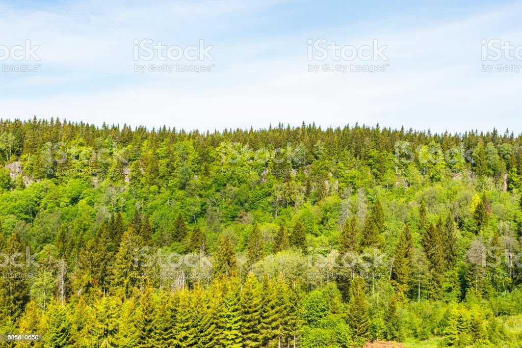 Lush green Woodland on a mountain side Lizenzfreies stock-foto