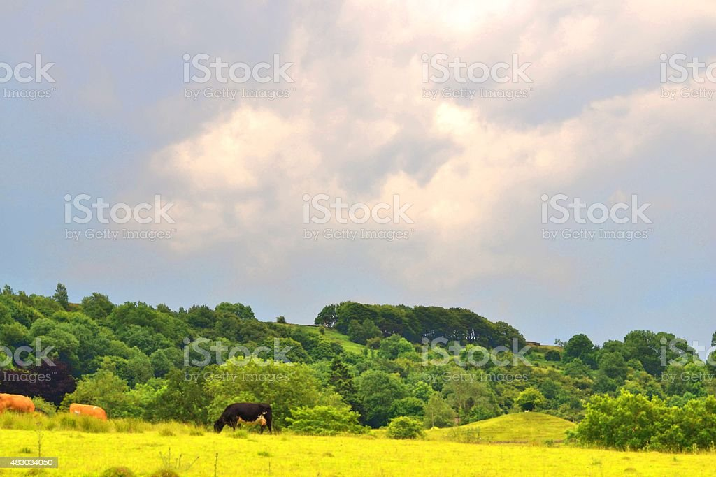 Lush Land stock photo