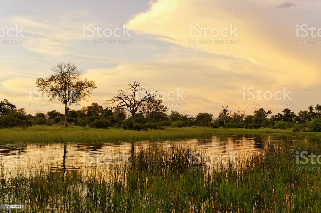lush landscape view of water in Botswana royalty-free stock photo