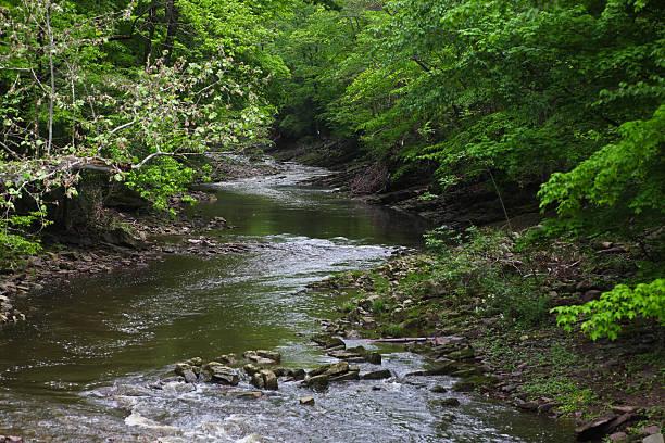 Lush Leafy Banks Along Delaware River Tributary stock photo