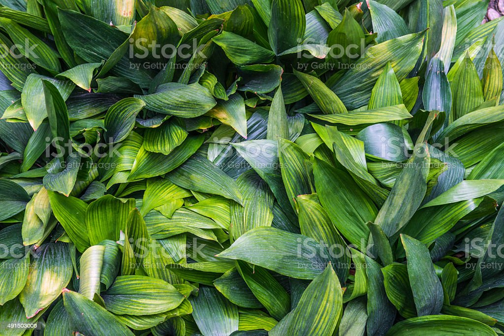 lush leaves royalty-free stock photo