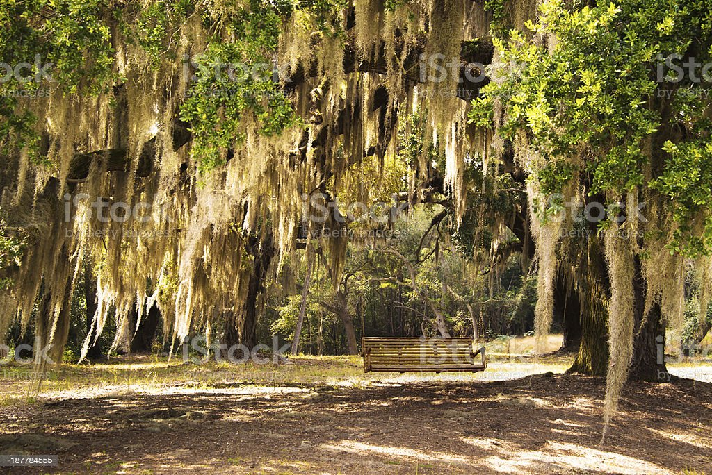 Lush Lowcountry afternoon stock photo