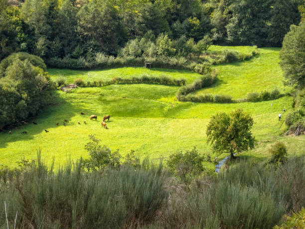 Lush meadow in the valley - Vilasinde stock photo