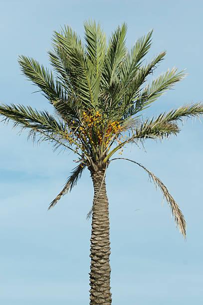 Lush palm tree against blue summer sky