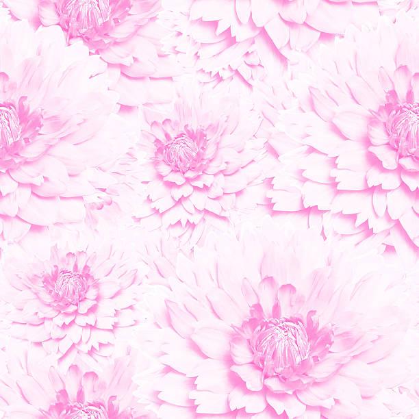 üppige rosa rosen nahtlose textur - fliesen verlegen stock-fotos und bilder