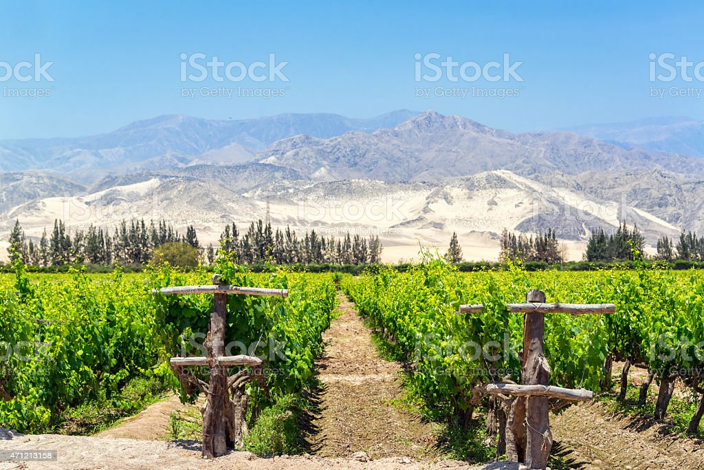 Lush Pisco Vineyard in Peru Lush green vineyard for the production of pisco in Ica, Peru with dry sand covered hills in the background 2015 Stock Photo