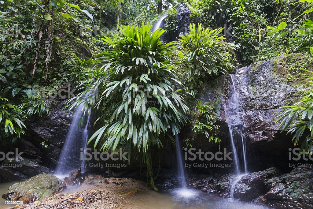 Lush Rainforest and Falls royalty-free stock photo