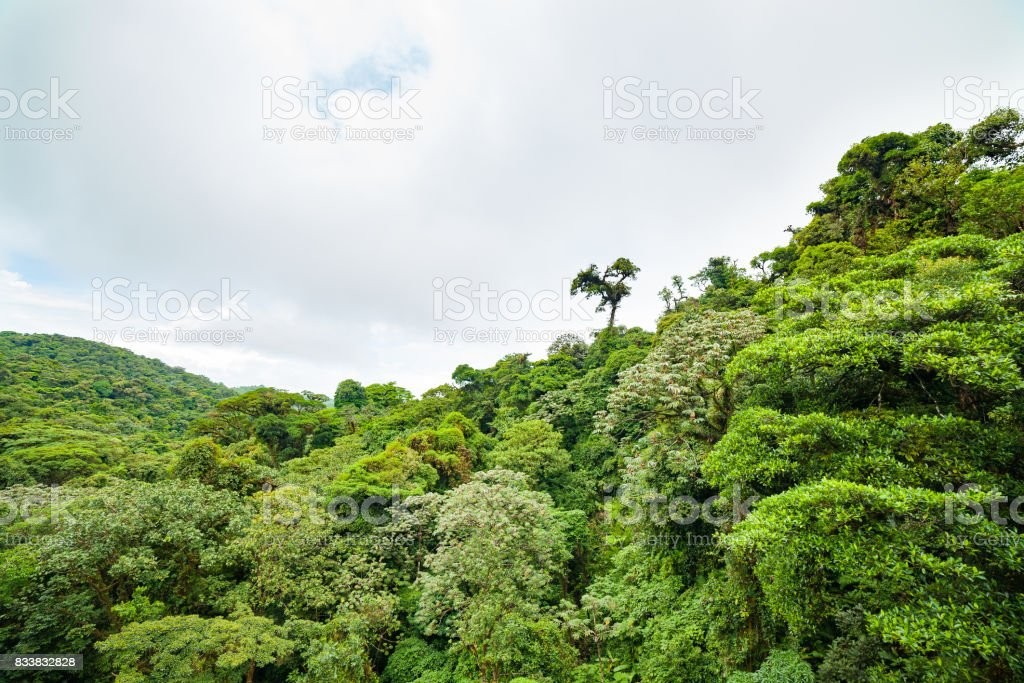 Dossel de floresta tropical exuberante Monteverde Costa Rica - foto de acervo