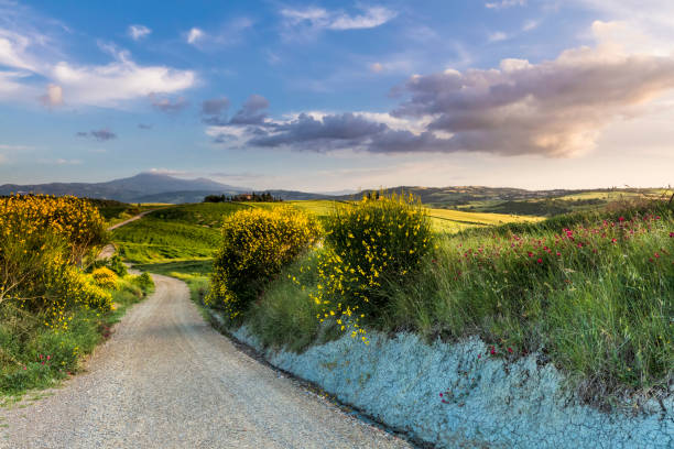 Lush springtime landscape of Tuscany stock photo