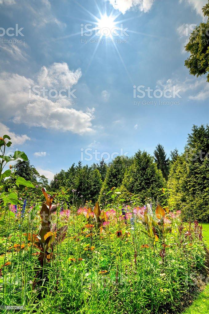 Lush summer flower garden (HDR) royalty-free stock photo