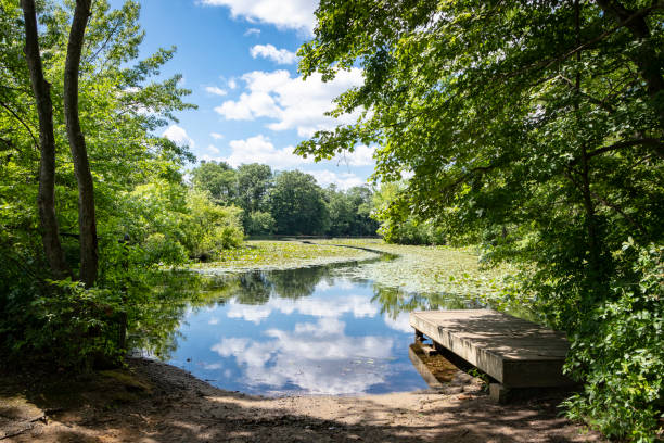 Lush summertime view of pond environment stock photo