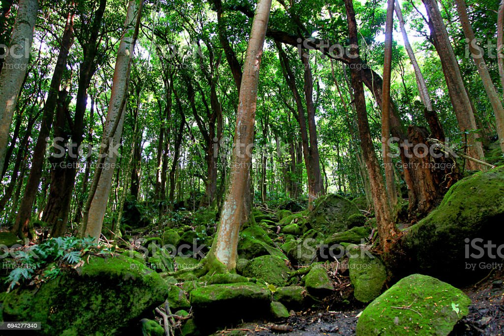 Lush tropical forest in Kauai Hawaii stock photo