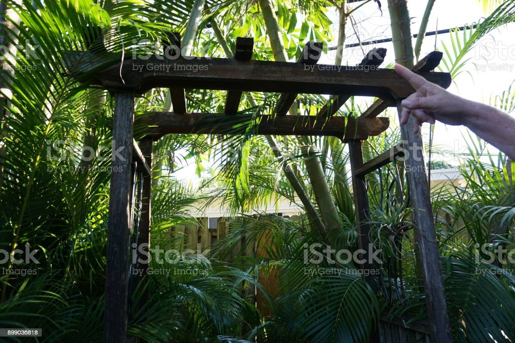 Lush tropical green landscape stock photo