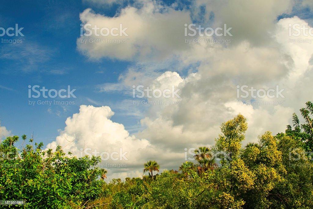 Lush tropical landscape royalty-free stock photo