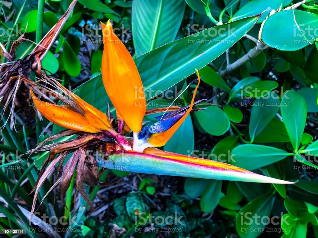 lush tropical plants stock photo