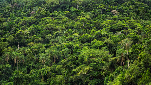 Lush Tropical Rainforest in Brazil stock photo