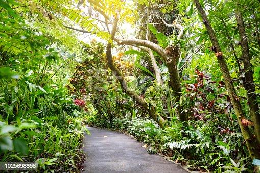 Lush tropical vegetation of the Hawaii Tropical Botanical Garden of Big Island of Hawaii, USA