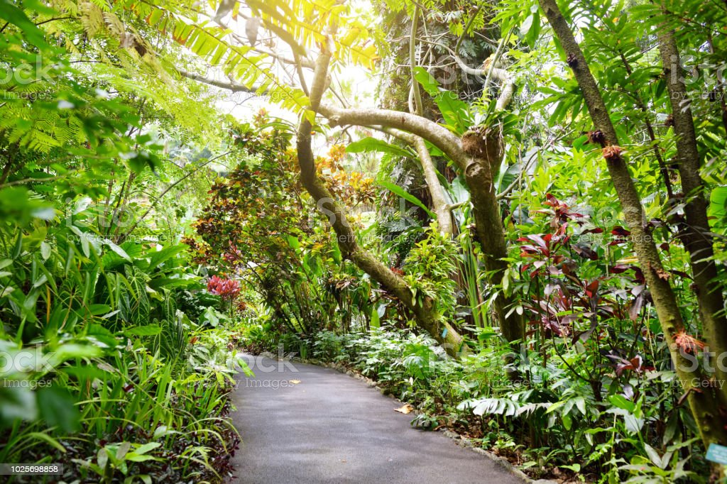 Lush tropical vegetation of the Hawaii Tropical Botanical Garden of Big Island of Hawaii stock photo