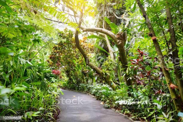 Photo of Lush tropical vegetation of the Hawaii Tropical Botanical Garden of Big Island of Hawaii