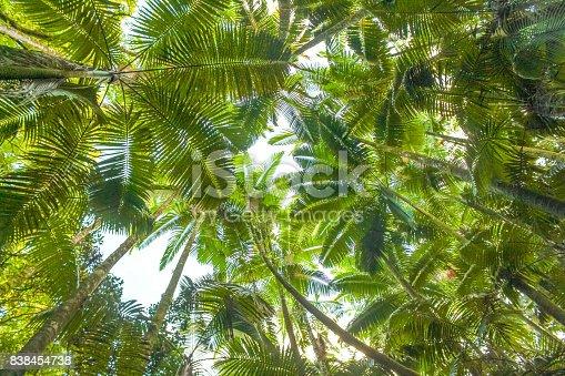 Stunning lush green tropical rainforest setting, scenic and idyllic